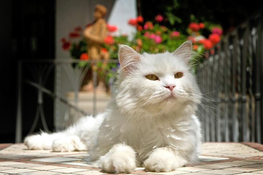 17 febbraio la festa del gatto in occasione della for La coda del gatto